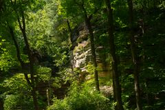 Стены каньона через деревья стоковые фото