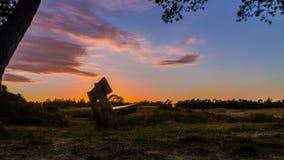 Стенд в заходе солнца лета Стоковые Изображения