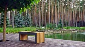 Стенд в сосновом лесе Стоковая Фотография RF