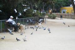 Стенд голубей человека сиротливый подавая стоковые фотографии rf