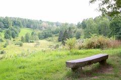 Стенд лесом Стоковое фото RF