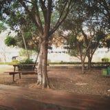 Стенд и дерево Стоковые Изображения