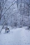 Стенд и путь в лесе зимы Стоковые Изображения