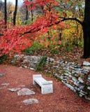 Стенд парка осени стоковая фотография rf