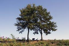 Стенд под деревьями Стоковые Изображения RF
