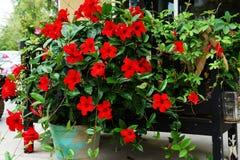 Стенд цветка Outdoors Стоковая Фотография RF