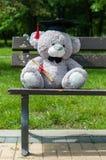 Степень бакалавра плюшевого медвежонка постдипломная Стоковое фото RF