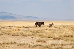 степь лошади Стоковое фото RF