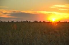 Степь на заходе солнца Стоковое Фото