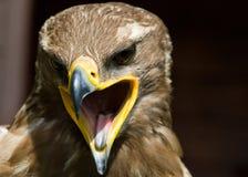 степь орла Стоковая Фотография