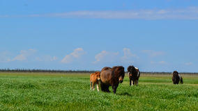 степь лошадей одичалая Стоковые Фотографии RF