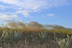 Степь травы пера Стоковые Изображения