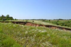 Степь травы пера Стоковая Фотография