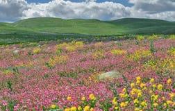 степь цветения Стоковое Фото