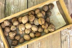 Стержени грецкого ореха Стоковые Изображения RF