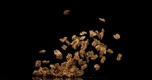 Стержени грецкого ореха, regia juglans, приносят плоды падающ против черной предпосылки, замедленного движения сток-видео