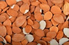 Стержень высушенного абрикоса Стоковая Фотография