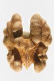 Стержень грецкого ореха Стоковые Фото