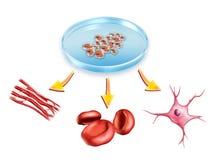 стержень клеток Стоковое Изображение