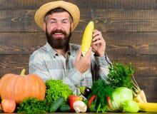 Стержень кукурузного початка владением фермера человека жизнерадостный бородатый или предпосылка маиса деревянная Соломенная шляп стоковое изображение rf