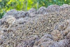 Стержень кукурузного початка после пользы Стоковые Фотографии RF