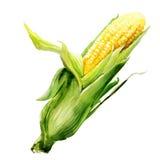 Стержень кукурузного початка с листьями Стоковое Изображение