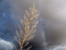 стержень травы Стоковое фото RF