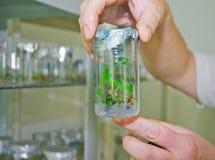 стержень vitro виноградин Стоковая Фотография RF