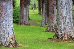 Стержни высоких деревьев стоковое изображение
