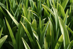 стержни зеленого цвета ii Стоковое Изображение