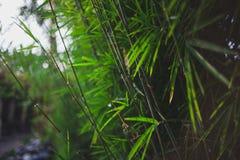 Стержни и листья бамбуковой текстуры Стоковые Изображения