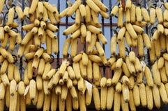 Стержни кукурузного початка стоковая фотография