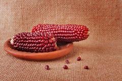 Стержни кукурузного початка Browny красные на дерюге Стоковая Фотография RF