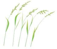 Стержни травы в ветре Стоковые Фотографии RF