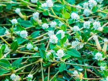 Стержни цветков серебряные Стоковые Изображения RF