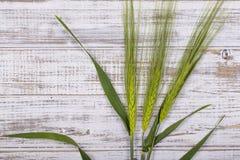3 стержня зеленой пшеницы на деревянной белой предпосылке Стоковая Фотография