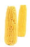 2 стержня кукурузного початка на белой предпосылке Стоковые Изображения