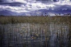 Стерня и озеро Стоковая Фотография RF