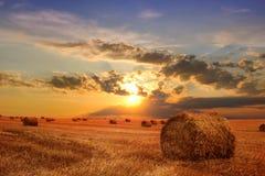 стерня сена поля bales Стоковые Фото