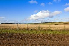 Стерня соломы и деревянная загородка Стоковое Фото