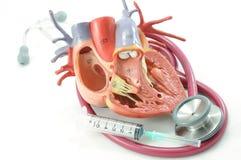 стетоскоп сердца Стоковые Фото