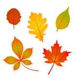 Стикеры листьев осени Стоковые Изображения RF