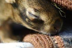 стикер кролика зайчика младенца newborn стоковые изображения