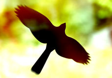 Стикер силуэта птицы на окне Стоковое Изображение RF