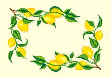 Стилизованная рамка угла ветви лимона Стоковая Фотография RF