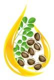 стилизованное масла moringa падения oleifera иллюстрация штока