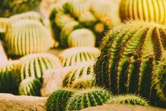 Стиль года сбора винограда атмосферы солнечного света поля кактуса крупного плана теплый стоковое изображение rf