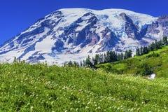 Стирка национального парка Mount Rainier рая Wildflowers Bistort Стоковое Изображение