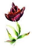 Стилизованный цветок тюльпана Стоковые Фотографии RF