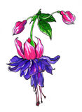 Стилизованный Fuchsia тропический цветок для wedding продуктов печатания Стоковые Изображения RF